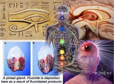 Епифизната жлеза: една от НАЙ-ГОЛЕМИТЕ, крити от човечеството тайни