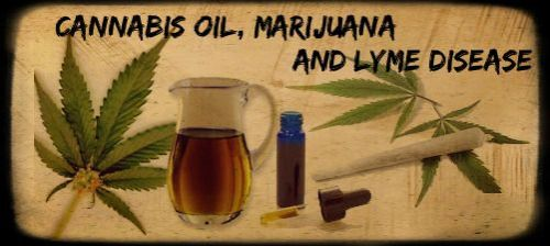 cannabis-lyme