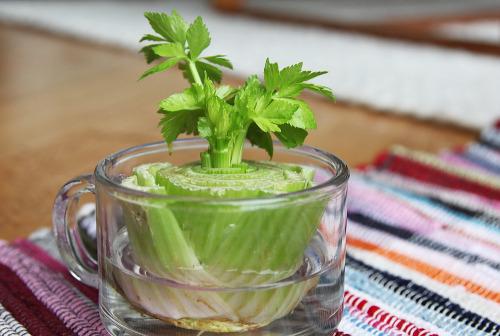 Как повече да не купуваме селъри, като непрекъснато си отглеждаме растението у дома
