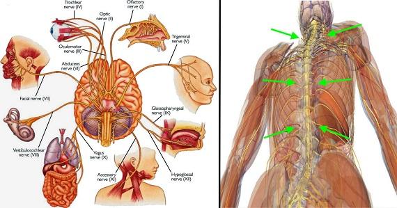 Мигновено стимулиране на вагусовия нерв облекчава възпаление, депресия, мигрени…