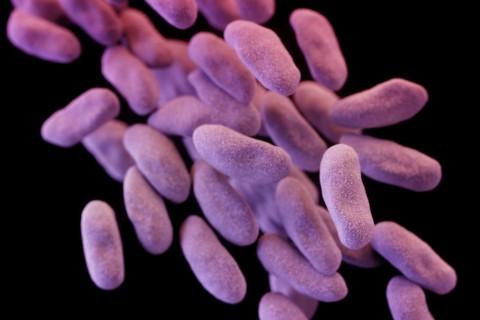 Резизтентна на ВСИЧКИ антибиотици супербактерия слага край на ерата на антибиотиците, изходът