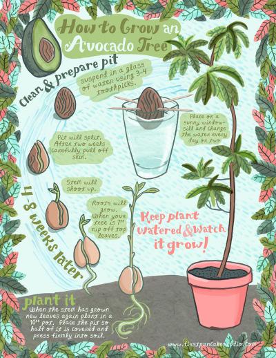 avocado-instructions