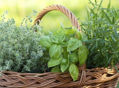 gathered-herbs