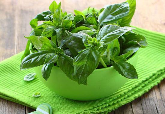 Свещеният босилек е силен в кухнята и още по-полезен за здравето, не се лишавайте от тази билка за нищо на света