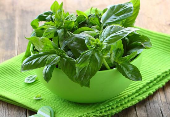 basil-health-benefits