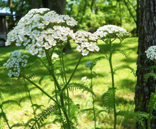 Подложени сте на стрес? 7 лечебни билки ни спасяват в различни ситуации