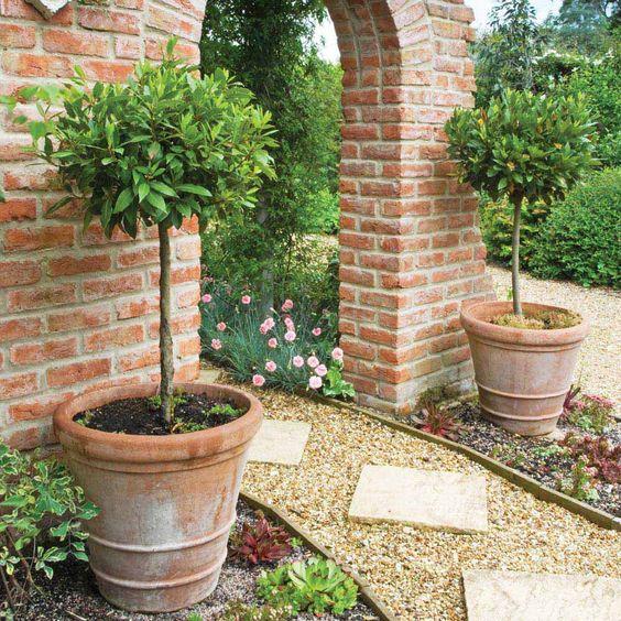Доставете си удоволствието да имате дафиново дръвче в дома си