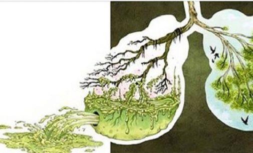 Незаменим лек за чисти бели дробове и силна имунна система!