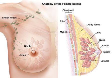 detox-prevent-breast-cancer
