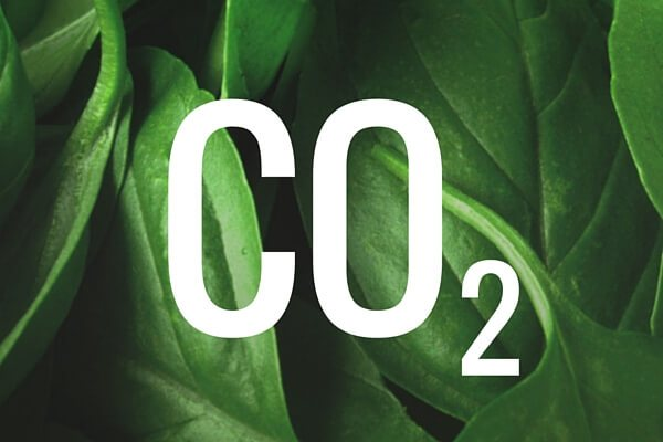ИСТИНСКАТА НАУКА за въглеродния двуокис: Растенията използват CO2 да създават CBD, THC, куркумин и всички лечебни молекули