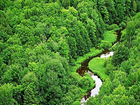 Парижкото споразумение за климата е ГЕНОЦИД срещу растенията, горите и целия живот на планетата