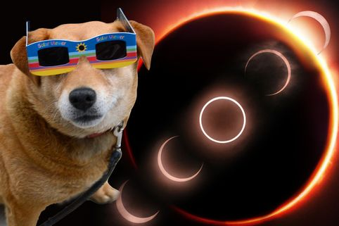 Как се чувстват домашните любимци при слънчево затъмнение, 6 забавни факта за затъмненията