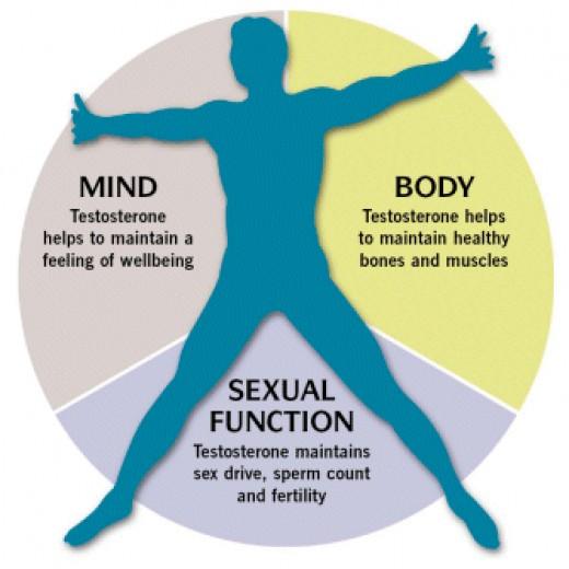 Вижте нормалното ниво на тестостерон при мъжете
