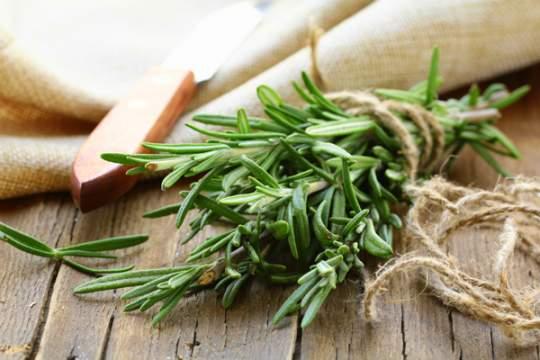 Розмарин – билката, която сразява метаболитния синдром