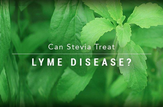 Стевия – сладкото решение за лаймската болест?