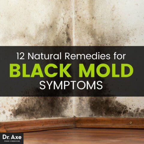 mold-remedies
