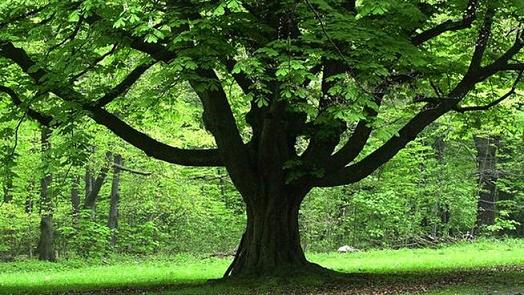 Дърветата ни помагат да оздравяваме! Ето как да ползваме енергията им