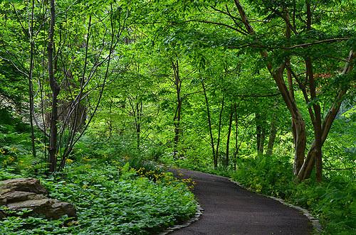 walk-wood