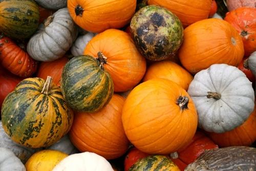 Най-ефикасните десет съвета за оптимални имунитет и жизненост през есента и зимата