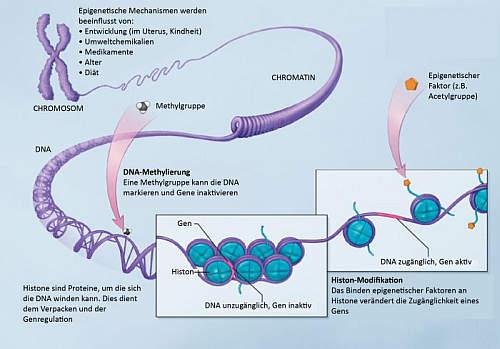 Епигенетика: Как можете да промените гените и живота си