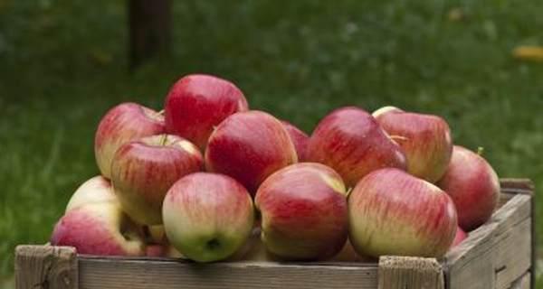 Откажете цигарите след само три дни с ябълки