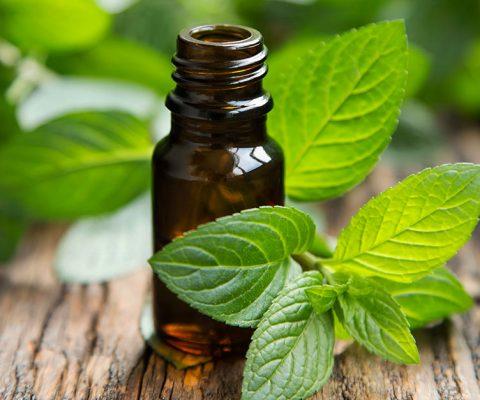 Ментово масло за множество ползи за здравето, рецепта