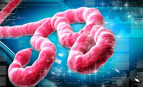 5 ЛЪЖИ за Ебола, които ни разправя правителството