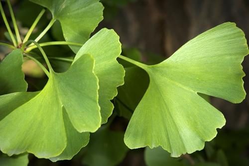 5 билки спират загубата на слуха