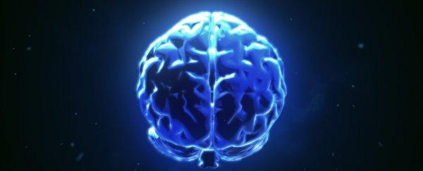 10 неща, които научихме за мозъка през 2018
